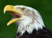 Ptaki Magurskiego Parku Narodowego.